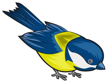 chickadee: Bird titmouse. Tit. Isolated illustration in vector format Illustration
