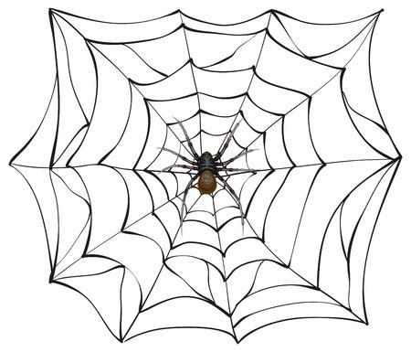 Spiderweb. Big spider web. Scary spider of web. Poison spider. Illustration in vector format Illustration