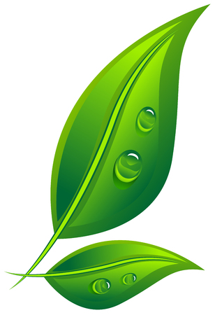 dew: Two green leaf with dew drops. Isolated on white vector illustration Illustration