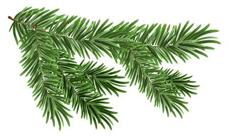 abetos: Verde rama de abeto exuberante. Ramas de abeto. Aislado en blanco Vectores