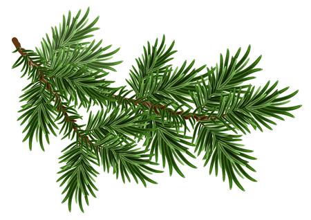 Bont-boom tak. Groene pluizige pijnboomtak. Op wit wordt geïsoleerd Stockfoto - 47557671
