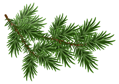 Fur-tree branch. Green fluffy pine branch. Isolated on white