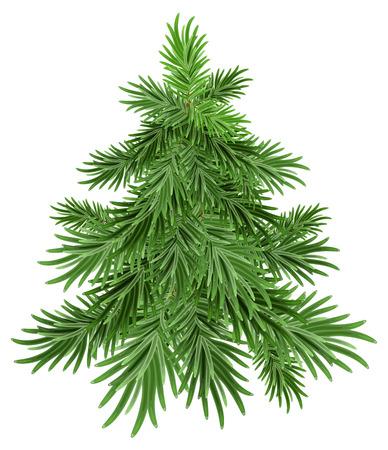 albero pino: Green pine tree.