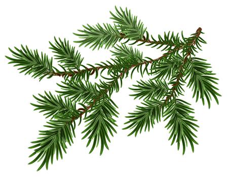 Bont-boom tak. Groene pluizige pijnboomtak. Geïsoleerd op witte illustratie Stockfoto - 48085265