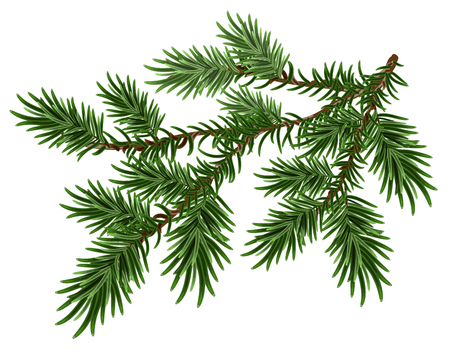 Fur-tree branch. Green fluffy pine branch. Isolated on white illustration