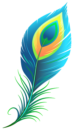 Peacock feather. Isolated illustration format Vectores