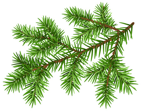 Pine tree branch. Green fluffy pine branch. Isolated on white vector illustration