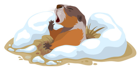 climbed: Groundhog Day. Marmot climbed out of hole and yawns. Illustration in vector format