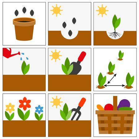 seedlings: Groving sedlings. Seeds, seedlings and harvest. Set illustration in vector format