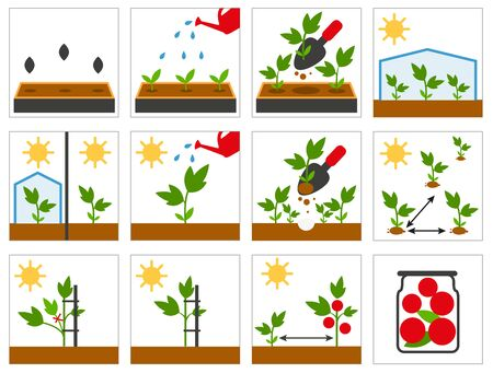 agricultural: Groving sedlings. Farming seedling. Agricultural engineering. Set illustration in vector format
