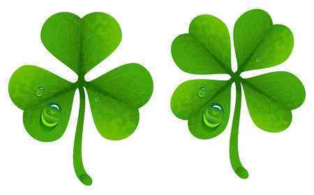 lucky clover: Clover leaves with drops of dew. Lucky Clover leaf. Isolated on white illustration Illustration