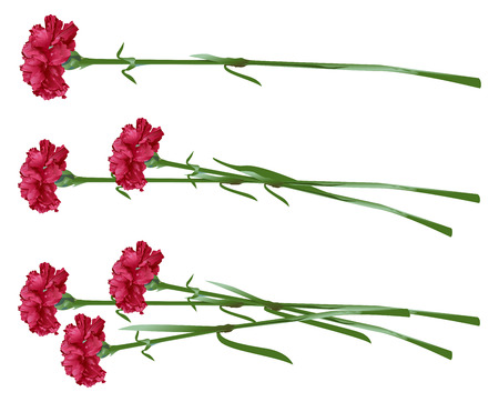 Red clove. Bouquet of carnations. Set carnation flowers. Isolated on white vector illustration