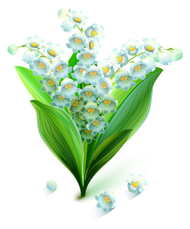 lily flowers: Flower lily valley. Bouquet lily of valley. Isolated on white vector illustration
