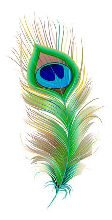 Pauwenveer. Mooie vogel veer. Geïsoleerd op wit vector illustratie