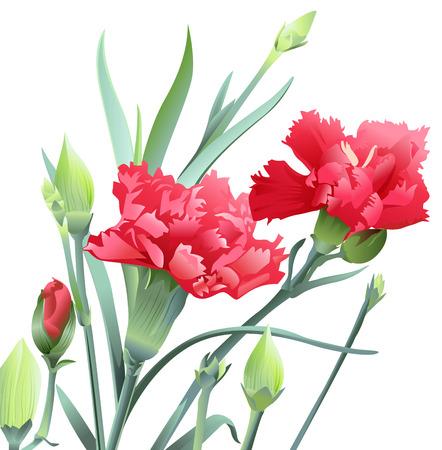 Bukiet kwiatów goździków samodzielnie na białym tle. Ilustracja wektora