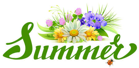 chamomile: Summer lettering text. Bouquet of wild flowers chamomile, clover, bells. Illustration in vector format
