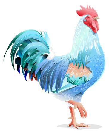 Blauwe vogel haan. Blue Rooster symbool 2017 jaar. Afbeelding in de indeling Stockfoto - 55967127