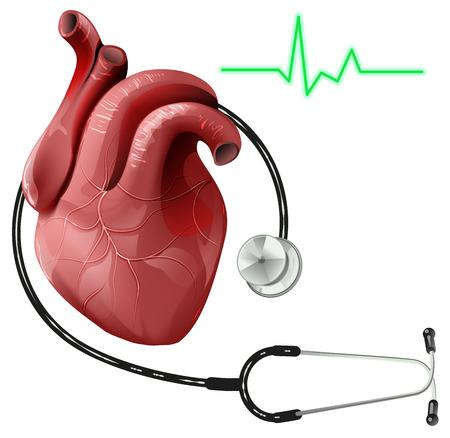 corazón humano realista y estetoscopio. Aislado en blanco ilustración vectorial