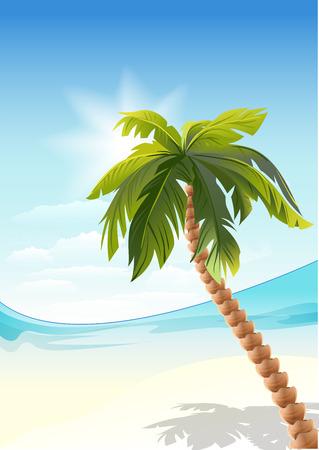 white sand beach: Palm tree on beach. White Sand beach. Illustration in vector format