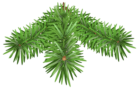 fir branch: Green Fir branch. Pine branches isolated on white background. Illustration in vector format