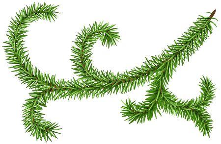 Dekoration Tannenzweig für Weihnachten Kranz. Grüne Tannenzweig isoliert. Illustration im Vektorformat