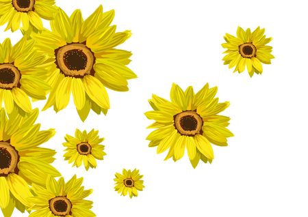 sunflower isolated: Flowers sunflower isolated on white. Floral background. Illustration in vector format Illustration