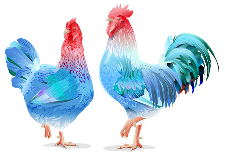 chinese years: Blue Rooster and chicken female symbol 2017 by Chinese calendar. Isolated on white vector illustration Illustration