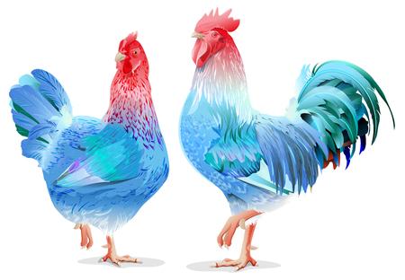 Gallo azul y pollo símbolo femenino 2017 por el calendario chino. Aislado en blanco ilustración vectorial