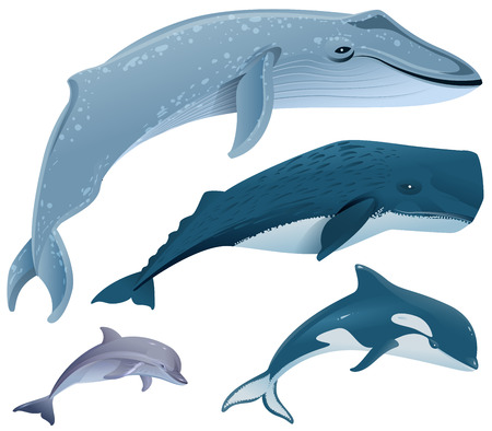 cetacea: Set marine mammals. Blue whale, sperm whale, dolphin, orca. Isolated on white vector illustration