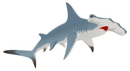 pez martillo: tiburón martillo grande. Aislado en blanco ilustración vectorial