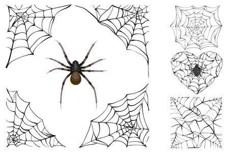 poisonous: Web and poisonous spider. Set Halloween accessory. Isolated on white vector illustration Illustration