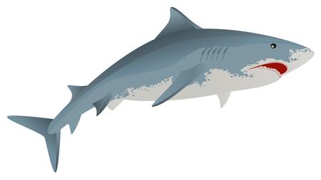 predator: Big white shark marine predator. Isolated vector illustration