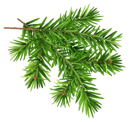 Green fluffy fir branch. Stock Illustratie