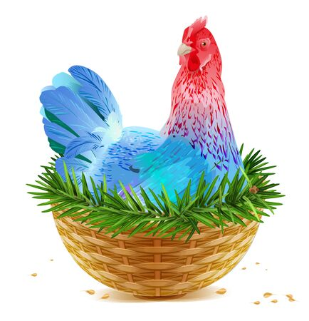 sits: Blue Christmas chicken laying hen symbol of 2017 sits in basket nest on spruce branch. Isolated on white vector cartoon illustration