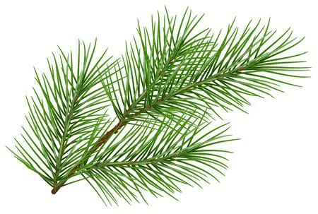 Het groene pluizige symbool van de pijnboomtak van nieuw jaar. Geïsoleerd op witte achtergrond Illustratie in vectorformaat