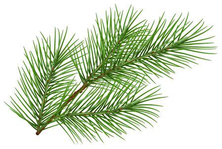 Green fluffy pine branch symbol of new year. Isolated on white background. Illustration in vector format Illustration