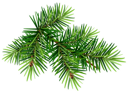 Green Christmas pine tree branch. Isolated on white vector illustration