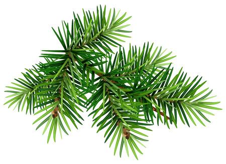 Groene kerstpijnboomtak. Geïsoleerd op witte vectorillustratie