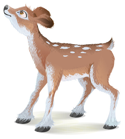 Brown small fawn raised his head up. Isolated on white vector cartoon illustration Illustration