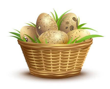 Quail eggs full wicker basket. Isolated on white vector illustration