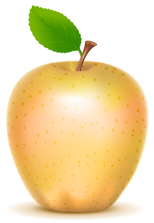 golden apple: Yellow transparent sort apple with green leaf. Isolated on white vector illustration Illustration