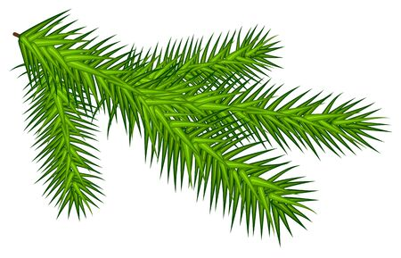 Green juicy spruce branch. Isolated on white vector illustration 일러스트
