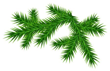 twigs: Green juicy pine branch Isolated vector illustration