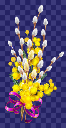 Yellow mimosa and fluffy branch of pussy willow bouquet. Isolated on transparent background vector illustration
