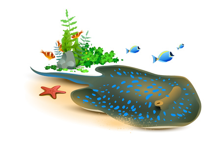 Electric stingray, starfish and fish underwater world. Isolated on white vector cartoon illustration Illustration