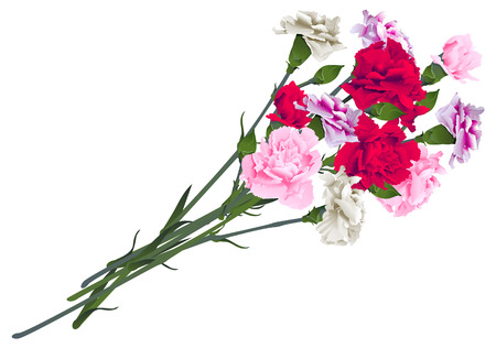 Red, white and pink carnation flowers bouquet isolated on white background. Vector illustration Ilustração