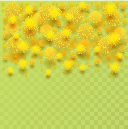 Yellow mimosa acacia flower fluffy petals on transparent background. Vector illustration greeting card template
