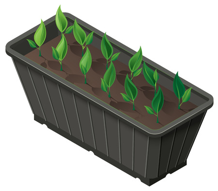 Isometric box with seedlings green plants shoots. Vector 3d illustration