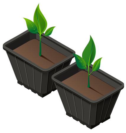 Div seedlings in plastic cup. Planting seedlings and growth. Vector 3d isometric illustration