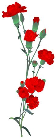 Red carnation bouquet symbol memory Russian victory day. Red clove isolated on white vector illustration